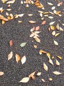 漢方の落ち葉
