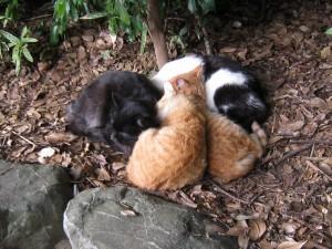 漢方のネコ