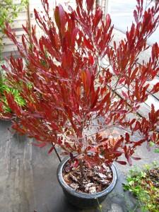 漢方の植物