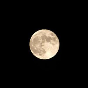 漢方の満月