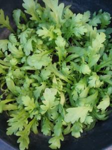 漢方の春菊