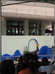 漢方のアシカショー