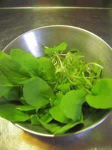漢方の小松菜