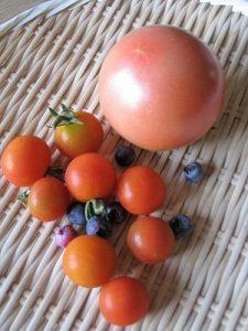 漢方のトマト