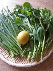 漢方の野菜の収穫