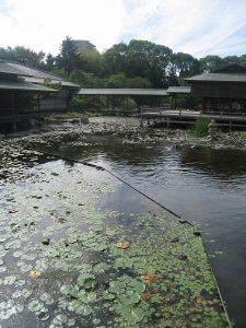 漢方の白鳥庭園